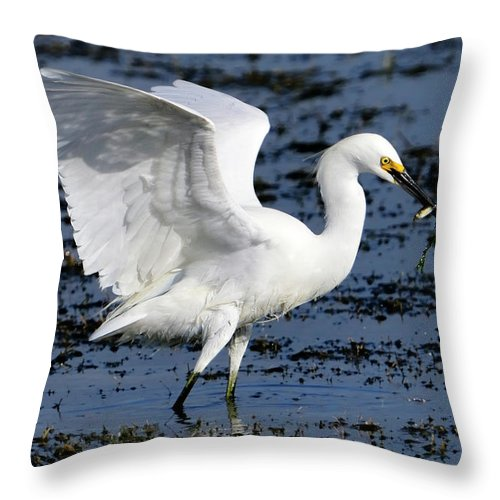 Fishing Throw Pillow featuring the photograph Fishing Dance by Bill Dodsworth
