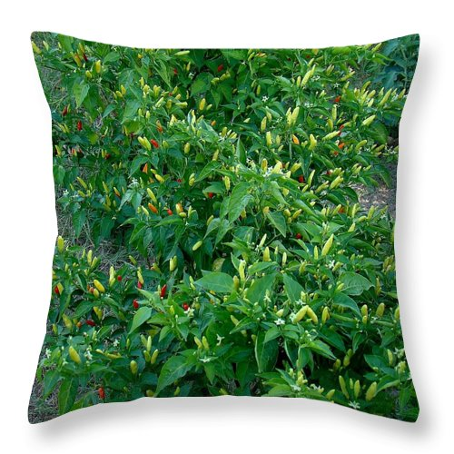 Tabasco Throw Pillow featuring the photograph Flame Up by Michael MacGregor