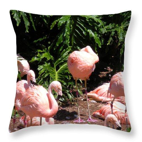 Birds Throw Pillow featuring the photograph Flamigo Gathering by Maria Bonnier-Perez