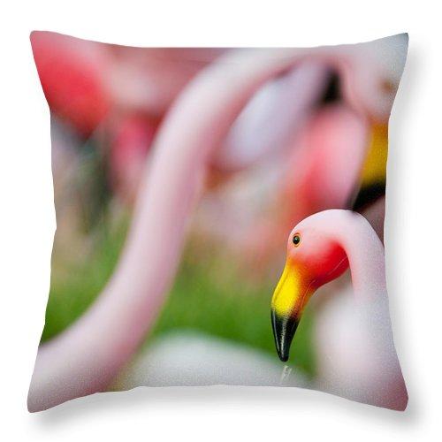 Austin Throw Pillow featuring the photograph Flamingo 4 by Sean Wray