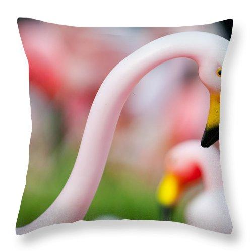 Austin Throw Pillow featuring the photograph Flamingo 5 by Sean Wray
