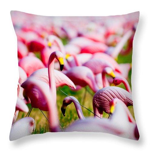 Austin Throw Pillow featuring the photograph Flamingo 7 by Sean Wray