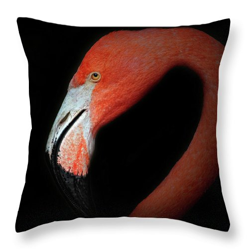Flamingo Throw Pillow featuring the photograph Flamingo Portrait by Dave Mills