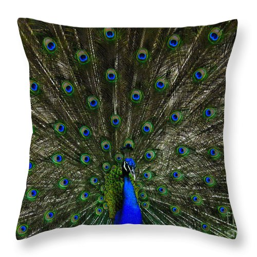 Peacock Throw Pillow featuring the photograph Flaunting The Colours by Elaine Manley
