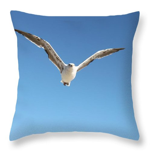 Birds Throw Pillow featuring the photograph Flight by Caroline Lomeli