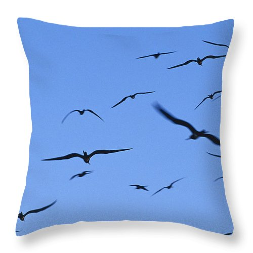 East Diamond Island Throw Pillow featuring the photograph Flocking Frigatebirds Riding by Jason Edwards