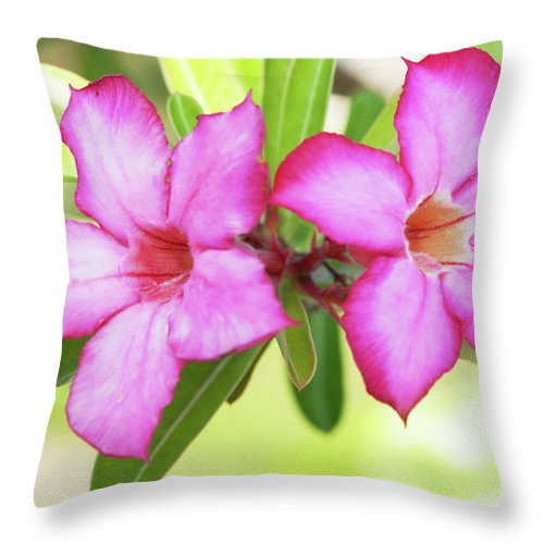 Blossom Throw Pillow featuring the photograph Floral Background. Desert Rose. by MotHaiBaPhoto Prints