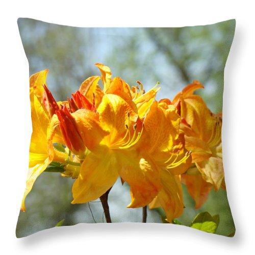 Nature Throw Pillow featuring the photograph Floral Nature Art Print Oragen Rhodies Flowers Baslee by Baslee Troutman