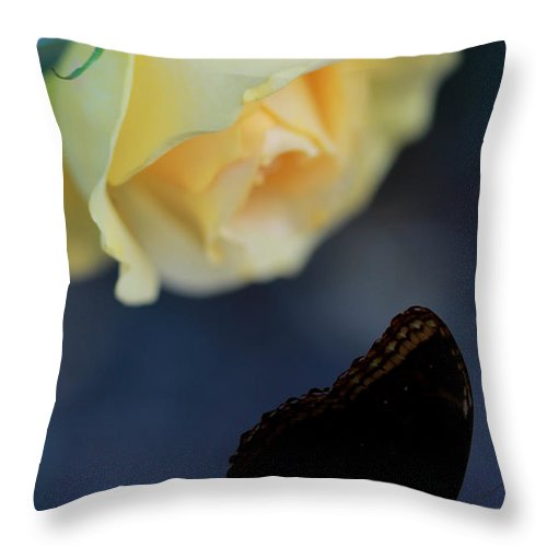 Floral Throw Pillow featuring the photograph Floral Spotlight by Elizabeth Hart