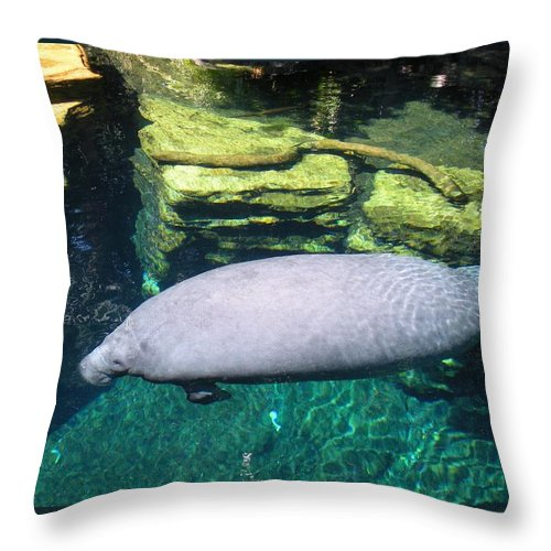 Manatee Throw Pillow featuring the photograph Florida Manatee by Maria Bonnier-Perez