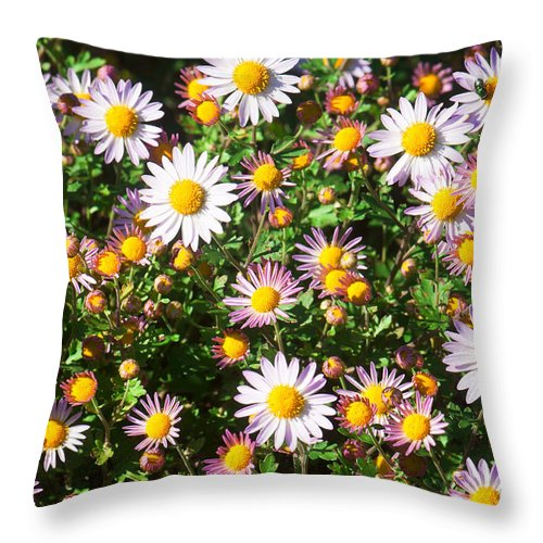 Daisies Throw Pillow featuring the photograph Flower Assault by Jim Moore