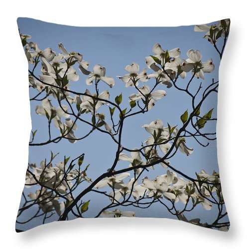 Flowering Dogwood Throw Pillow featuring the photograph Flowering Dogwood by Teresa Mucha
