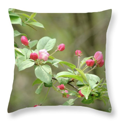 Green Throw Pillow featuring the photograph Flowering Tree by Ronald Grogan