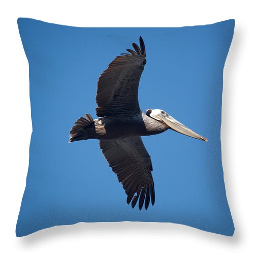 Pelican Throw Pillow featuring the photograph flying Pelican by Ralf Kaiser