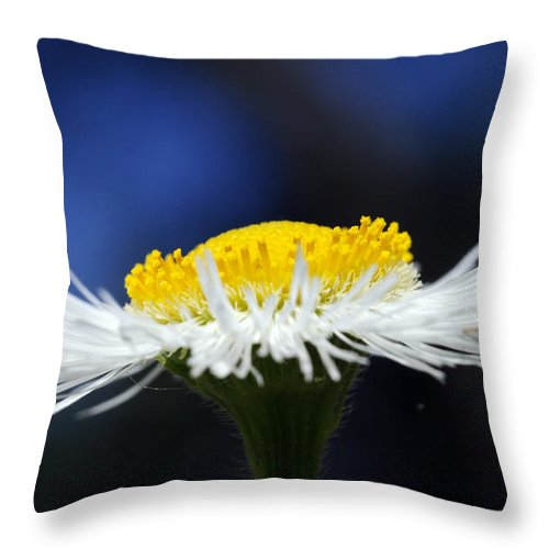 Weed Throw Pillow featuring the photograph Flying Saucer by Wanda Brandon