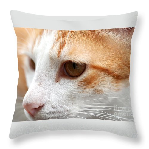 Art Throw Pillow featuring the photograph Focus by Ivy Ho