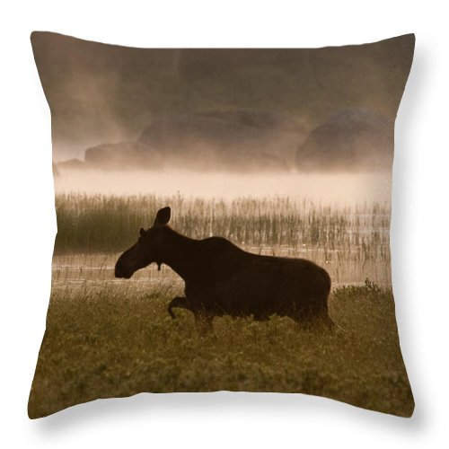Moose Throw Pillow featuring the photograph Foggy Stroll by Brent L Ander