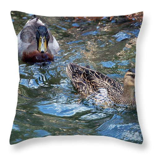 Ducks Throw Pillow featuring the photograph Follow The Leader by Donna Proctor