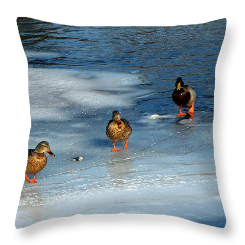 Duck Photographs Throw Pillow featuring the photograph Follow The Leader Duck Style by Ms Judi