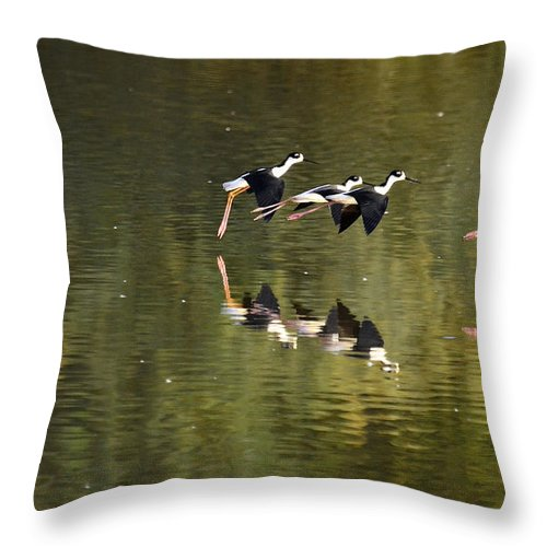 Stilts Throw Pillow featuring the photograph Follow The Leader by Saija Lehtonen