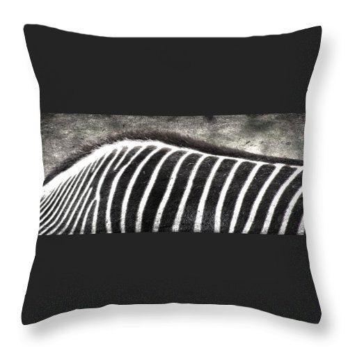 Jerry Cordeiro Framed Prints Framed Prints Framed Prints Framed Prints Framed Prints Framed Prints Framed Prints Framed Prints Throw Pillow featuring the photograph Foraging Spots by The Artist Project
