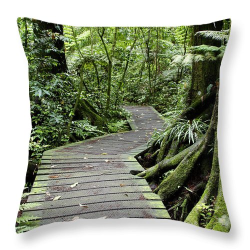 Boardwalk Throw Pillow featuring the photograph Forest Trail by Les Cunliffe