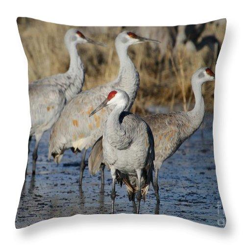 Bird Throw Pillow featuring the photograph Four Sandhill Cranes by Sabrina L Ryan