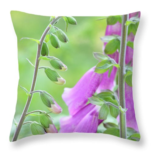 Digitalis X Mertonensis Throw Pillow featuring the photograph Foxglove Flowers by Neil Overy