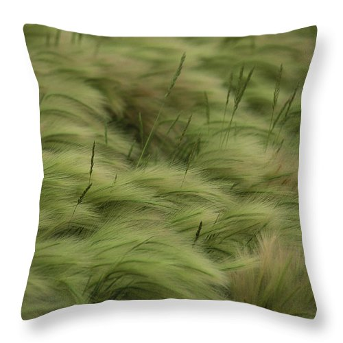Day Throw Pillow featuring the photograph Foxtail Barley And Western Wheatgrass by Annie Griffiths