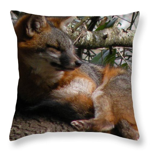 Zoo Throw Pillow featuring the photograph Foxy's Naptime by Trish Tritz
