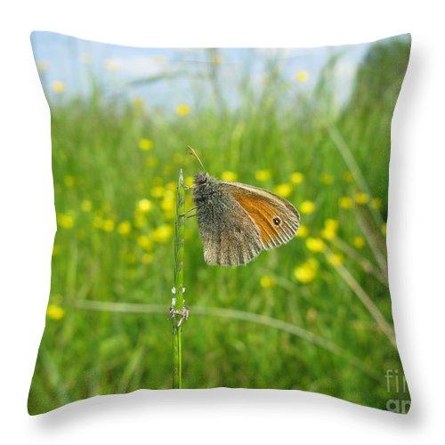 Butterfly Throw Pillow featuring the photograph Fragile Beauty #02 by Ausra Huntington nee Paulauskaite