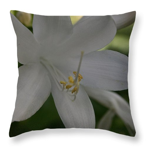 Outdoors Throw Pillow featuring the photograph Fragrant Plaintain Lily by Susan Herber