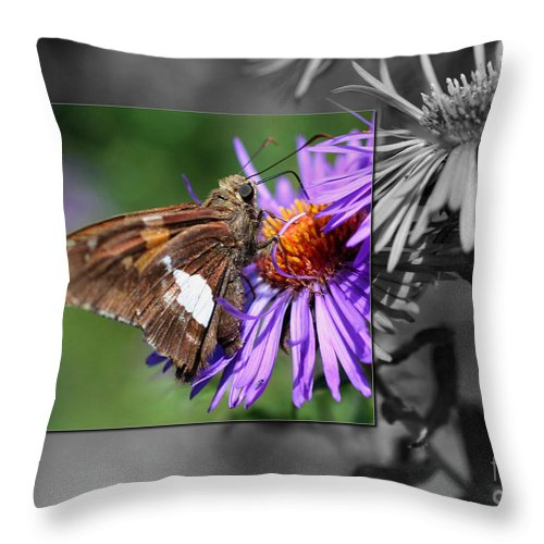 Butterfly Throw Pillow featuring the photograph Framed Butterfly by Smilin Eyes Treasures