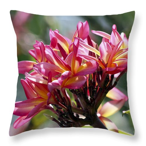 Flower Throw Pillow featuring the photograph Frangipani Delight by Teresa Zieba