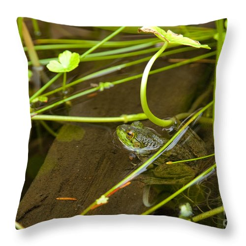 Frog Throw Pillow featuring the photograph Freddy by John Stephens