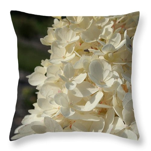Outdoors Throw Pillow featuring the photograph French Vanilla Hydrangea by Susan Herber