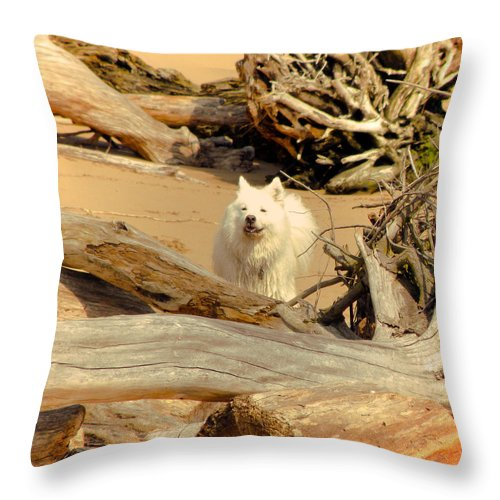 Dog Throw Pillow featuring the photograph Friend Along The Way by Trish Tritz