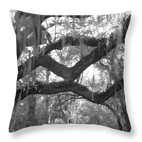 Tree Throw Pillow featuring the photograph Fringe by Jean Macaluso