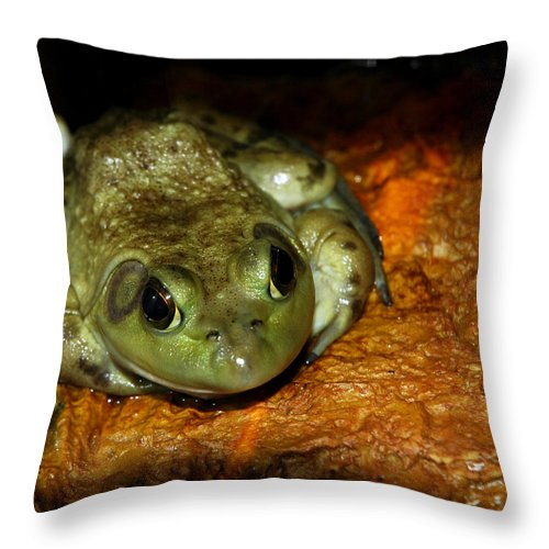 Usa Throw Pillow featuring the photograph Frog Love by LeeAnn McLaneGoetz McLaneGoetzStudioLLCcom