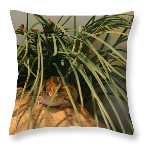 Frog Throw Pillow featuring the photograph Froggy by Nina Fosdick