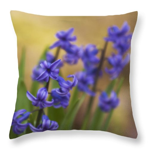 Flowers Throw Pillow featuring the photograph From The Garden by Steven Richardson