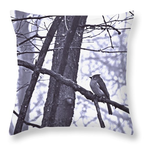 Tufted Titmouse Throw Pillow featuring the photograph Fronts The North Wind In Waistcoat Gray by William Fields