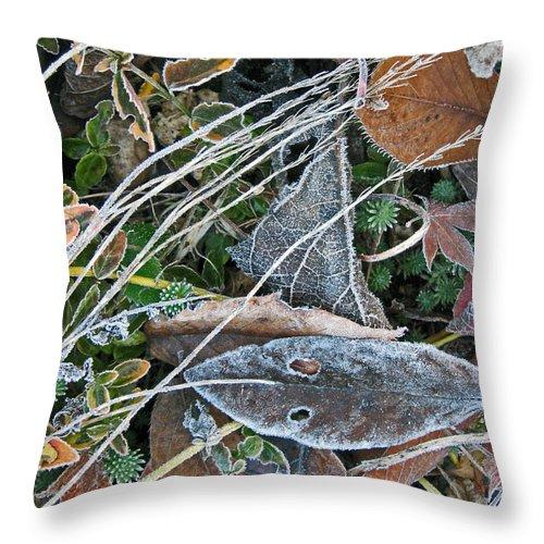 Frost Throw Pillow featuring the photograph Frost Composition by Ellen Miffitt
