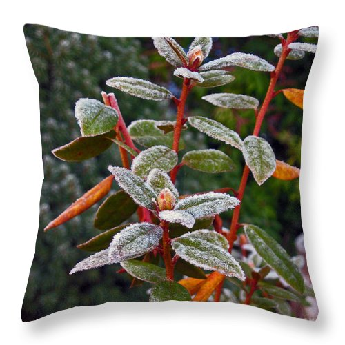 Frost Throw Pillow featuring the photograph Frosted Rhodie by Ellen Miffitt