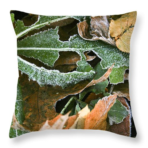 Grasses & Leaves Throw Pillow featuring the photograph Frosty Leaves II by Barbara Northrup