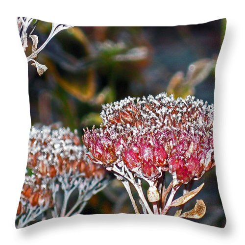 Frost Throw Pillow featuring the photograph Frosty Morning by Ellen Miffitt