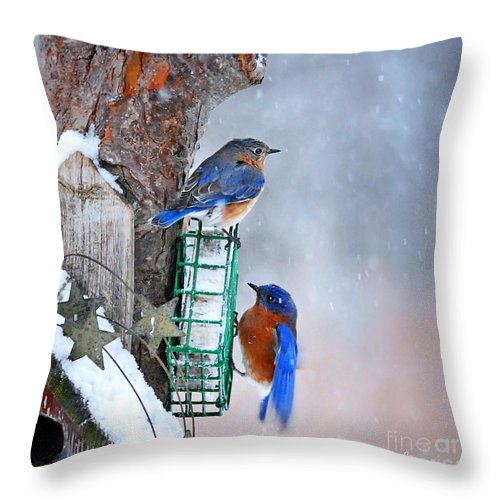 Nature Throw Pillow featuring the photograph Frozen Blue Plate Special by Nava Thompson