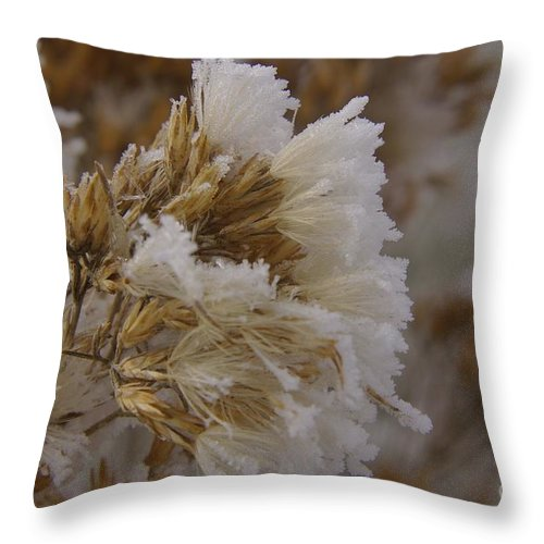 Winter Throw Pillow featuring the photograph Frozen In Time by Jeff Swan