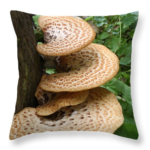Fungus Throw Pillow featuring the photograph Fungus Amongus by Jane Coenen