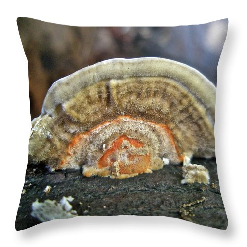Fungus Throw Pillow featuring the photograph Fuzzy Turkey Tail Shelf Fungus - Trametes Ochracea by Mother Nature